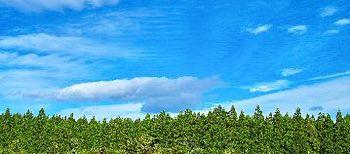 tree_woods_00049-12.jpg